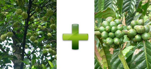 Garcinia Green Coffee